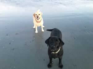 sen lovely dogs