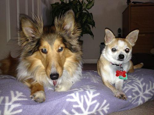 Bruno and Khloe