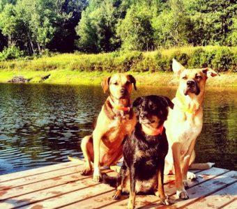 Bill Galvin's Dogs