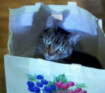 Cat in a pretty bag